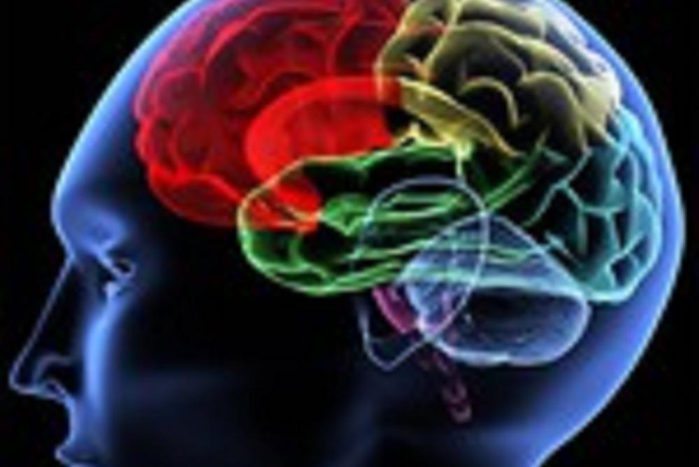 brain, science, neuroscience