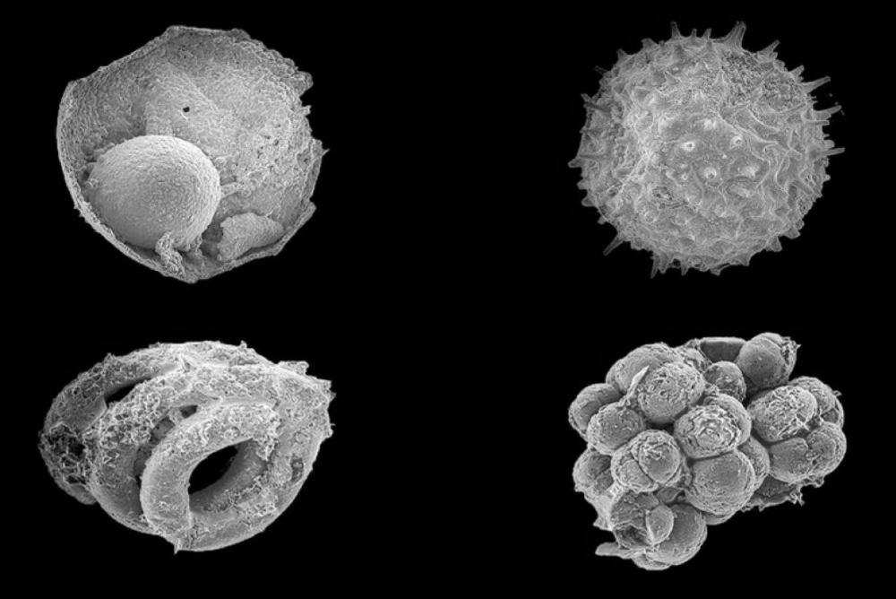 Photo of microfossils
