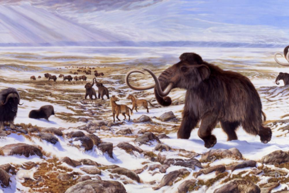 Photo of extinct megafauna