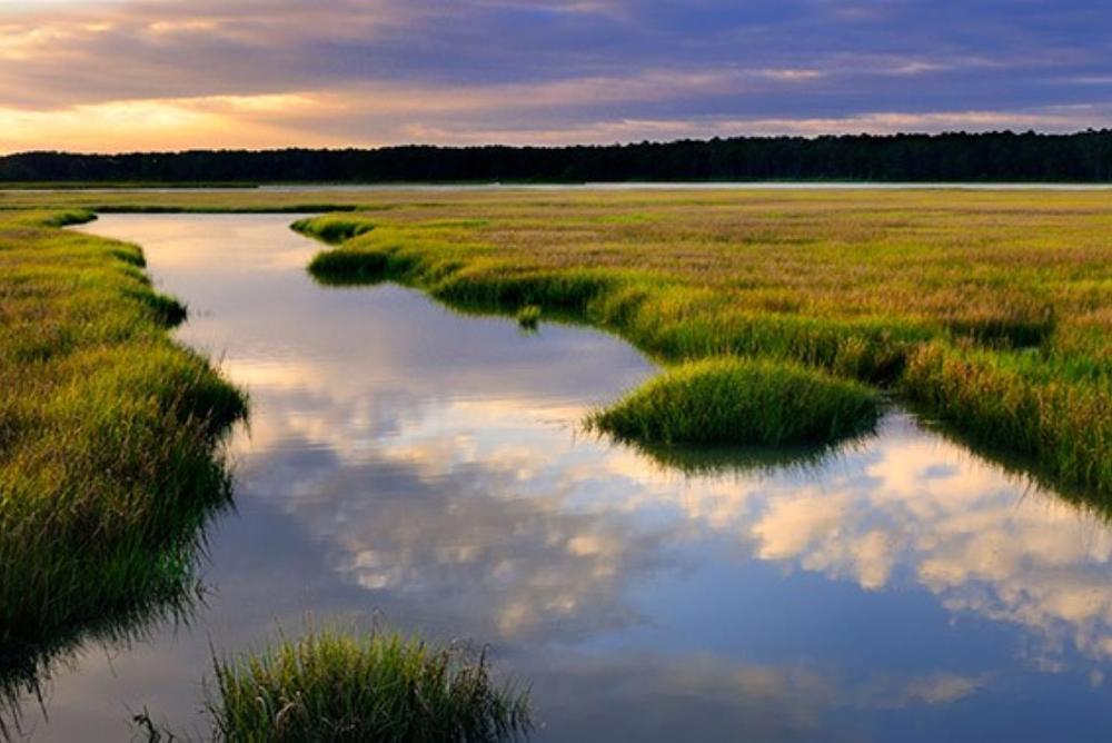 Photo of a salt marsh