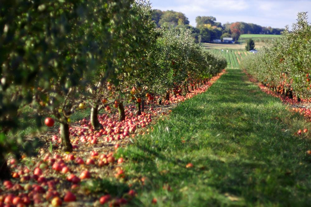 #fall #applepicking #boston