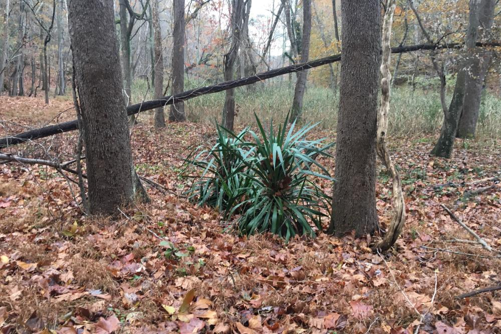 forest, leaves, brown, green shrub, Virginia