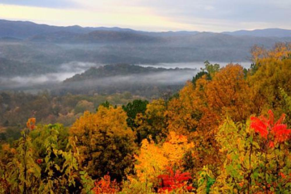 Fall Foliage in Pisgah National Forest