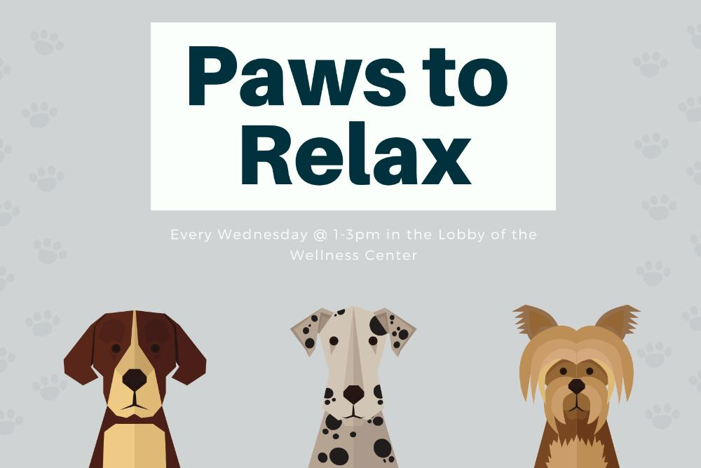 Therapy Dogs at the Wellness Center