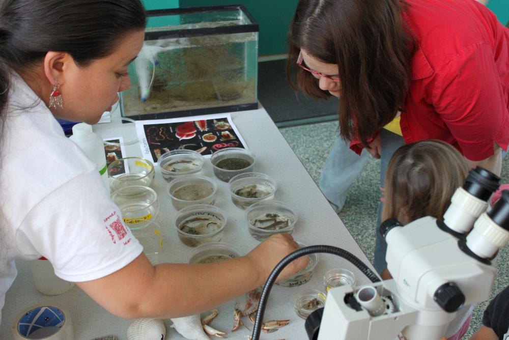 Activity Day guests learn from a VIMS Volunteer