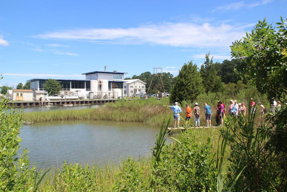 Public tour of the teaching marsh