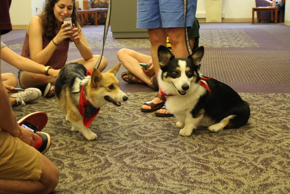 Therapy dogs, Louie and Humphrey