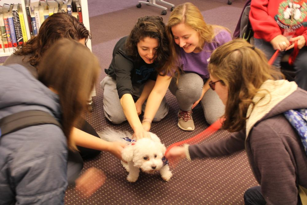 Therapy Dogs at Swem Library